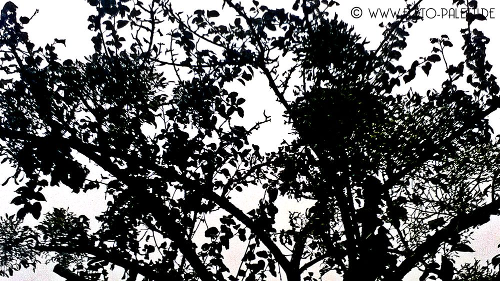 blackandwhite-tree