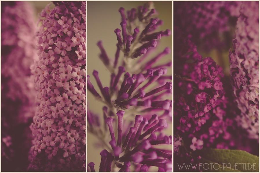 triptychon-schmetterlingsflieder-seo-fuer-fotografen