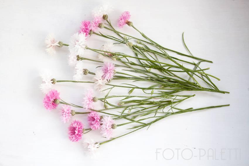 cornflowers pink