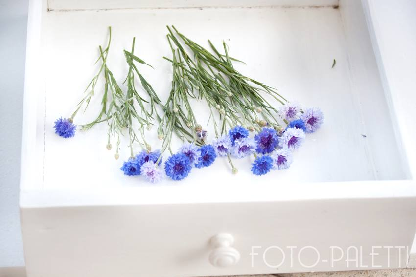 cornflowers in drawer