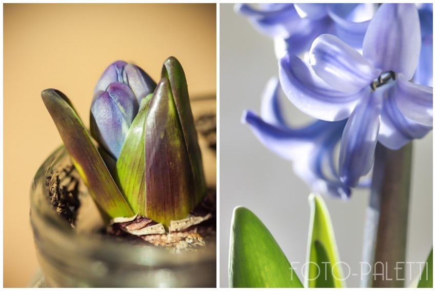 Blauer Frühlling
