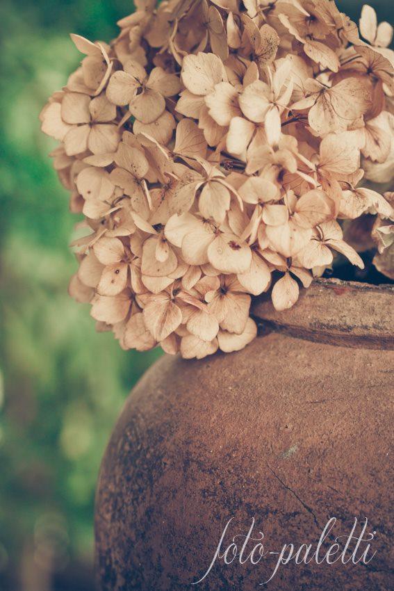 Getrocknete Hortensien in Krug