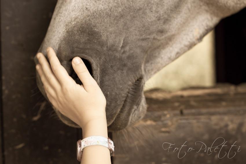 Kind streichelt Pferdemaul